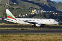 ©Alejandro Bethencourt (Canary Islands Spotting). Click to see full size photo