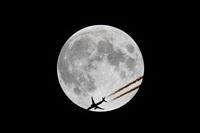 ©Rodrigo Carvalho - Noisy Spotters. Click to see full size photo