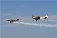 ©Carlos Moreira  *  PortugalSpotters.org. Click to see full size photo